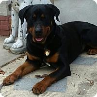Adopt A Pet :: Nala - Frederick, PA