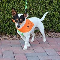 Adopt A Pet :: OREO BISCUIT - Las Vegas, NV
