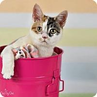 Adopt A Pet :: Bunn Bunn - Devon, PA