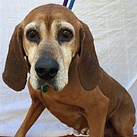 Adopt A Pet :: Sadie - Bremo Bluff, VA