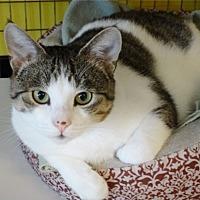Adopt A Pet :: Alexis - St. Johnsbury, VT
