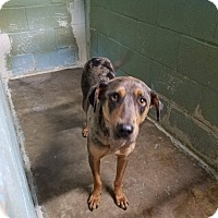 Adopt A Pet :: Indie - Walker, LA