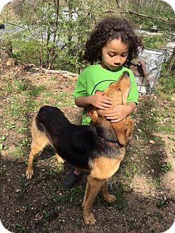 Coonhound/German Shepherd Dog Mix Dog for adoption in Allentown, Pennsylvania - Sweetheart