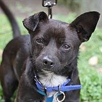 Adopt A Pet :: Milo - Pacific Grove, CA