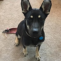 Adopt A Pet :: Jack - Evergreen, CO