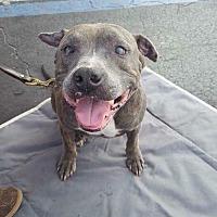 Adopt A Pet :: Blitzen - Sebring, FL