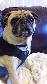 Pug Dog for adoption in La Mirada, California - Tofu
