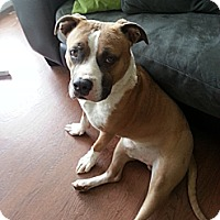 Adopt A Pet :: Barney - Calgary, AB