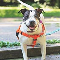 Adopt A Pet :: Calli - Berea, OH