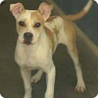 Adopt A Pet :: Kontiki - Bloomfield, CT