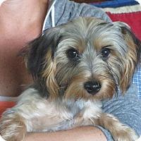 Adopt A Pet :: Armond - Greenville, RI