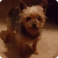 Adopt A Pet :: George - Freeport, NY