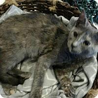 Adopt A Pet :: Lindsey - Texarkana, AR