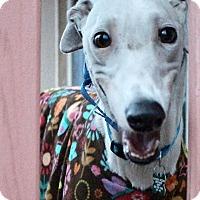 Adopt A Pet :: Elsa - Tucson, AZ