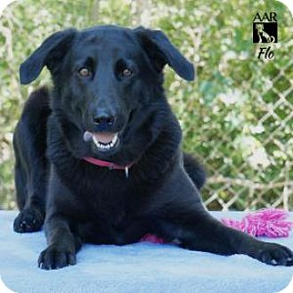 Labrador Retriever Mix Dog for adoption in Tomball, Texas - FLO