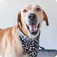 Adopt A Pet :: Scout - Victoria, BC