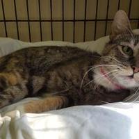 Adopt A Pet :: Annette - Erie, PA
