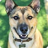 Adopt A Pet :: Bella - Guthrie, OK
