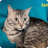 Adopt A Pet :: Sailor - San Juan Capistrano, CA