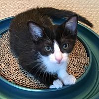 Adopt A Pet :: Ace - Orange, CA