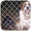 Photo 2 - St. Bernard Dog for adoption in Evansville, Indiana - Jessie