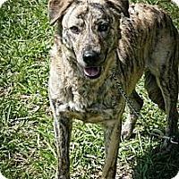 Shepherd (Unknown Type) Mix Dog for adoption in Jackson, Mississippi - Lady