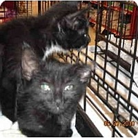 Adopt A Pet :: Clarice - Riverside, RI