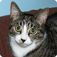 Adopt A Pet :: Little Lucy - North Branford, CT
