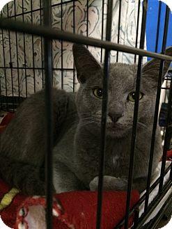 Domestic Shorthair Cat for adoption in Byron Center, Michigan - Nicholas
