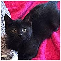 Adopt A Pet :: Miranda - Plymouth, MN