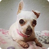 Adopt A Pet :: Calliope - AUSTIN, TX