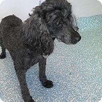 Adopt A Pet :: Loretta Lynn - Shawnee Mission, KS