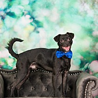 Adopt A Pet :: Johnny Ray - Fort Atkinson, WI