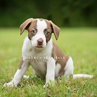 Adopt A Pet :: Maddox - Southbury, CT