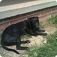 Adopt A Pet :: Cocoa - Linton, IN