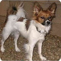 Adopt A Pet :: Andre - Scottsdale, AZ
