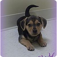 Adopt A Pet :: Bristol - Southport, NC