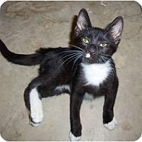 Adopt A Pet :: Sam - Orlando, FL