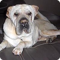 Adopt A Pet :: Lizzy - Gainesville, FL