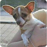 Adopt A Pet :: China - Pembroke Pines, FL