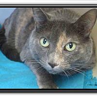 Adopt A Pet :: Molly - Cerritos, CA