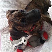 Adopt A Pet :: Dorothy - Homewood, AL