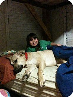 Anatolian Shepherd/Mastiff Mix Dog for adoption in Decatur, Georgia - Maggie