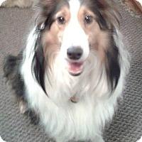 Adopt A Pet :: Grace - Pittsburgh, PA