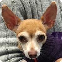 Adopt A Pet :: Precious - Medford, MA