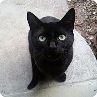 Adopt A Pet :: Diamond - Ocala, FL