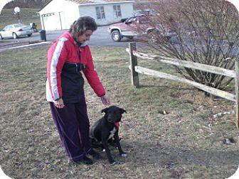 Labrador Retriever/Shepherd (Unknown Type) Mix Dog for adoption in Winfield, Pennsylvania - Oreo