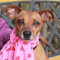 Adopt A Pet :: Lana - Garfield Heights, OH