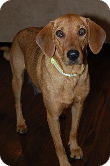 Vizsla Mix Dog for adoption in Hainesville, Illinois - Margo