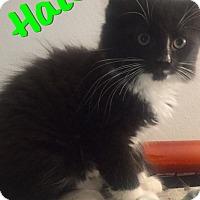 Adopt A Pet :: Halen - Waldorf, MD